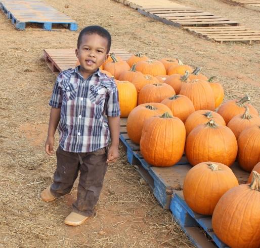 camden-at-pumpkin-patch